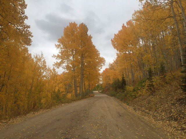 fall-blog
